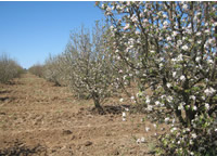 orchard_cultivated